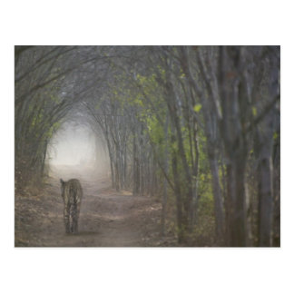Ranthamboreの森林のベンガルトラ ポストカード