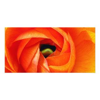 Ranunculusのマクロフォトカード カード