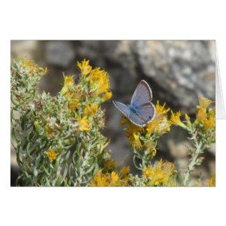 Reakirtの青い蝶 カード