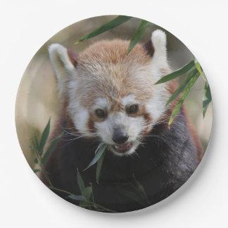 Red_Panda_2015_0311 ペーパープレート