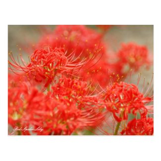 Red Spider Lily :[Postcard ポストカード