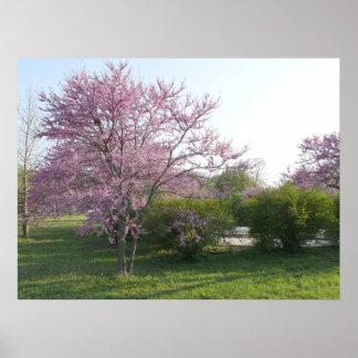 Redbudの木- el Dorado湖カンザス ポスター