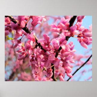 Redbudの花のプリント ポスター