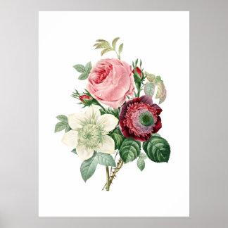 Redoute著元のバラの植物のプリント ポスター