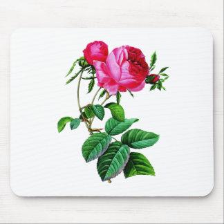 Redoute著美しいムラサキキャベツのバラ マウスパッド
