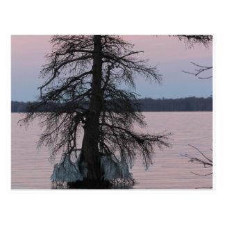 Reelfoot湖 ポストカード