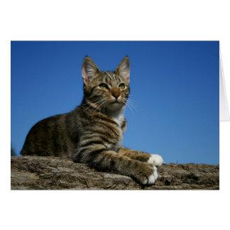 [Regal Cat Portrait] - Any Occasion カード