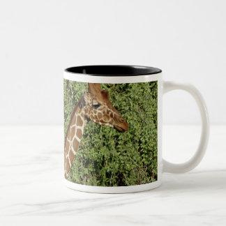 Reticulatedキリン、キリンのcamelopardalis ツートーンマグカップ