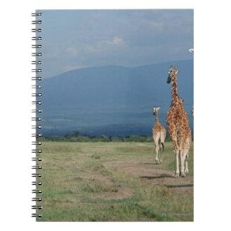 Reticulatedキリン(Giraffaのcamelopardalis) 2 ノートブック