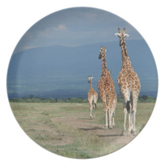 Reticulatedキリン(Giraffaのcamelopardalis) 2 プレート