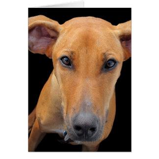 Rhodesian愛らしいRidgeback犬 カード