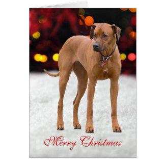 Rhodesian Ridgebac犬の写真のカスタムなクリスマスカード カード
