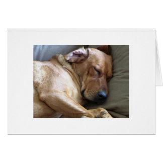 Rhodesian Ridgebackのラブラドール犬の組合せ カード
