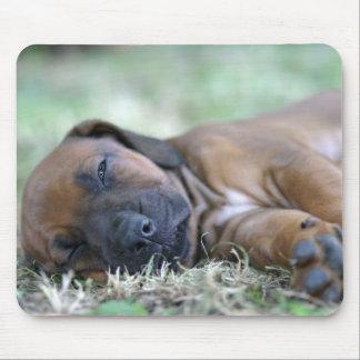 Rhodesian Ridgebackの子犬のマウスパッド マウスパッド