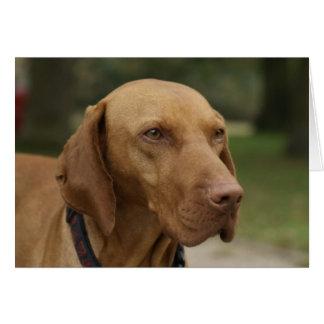 Rhodesian Ridgeback犬の挨拶状 カード