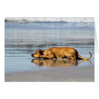 Rhodesian Ridgeback -水は冷たいですか。 カード