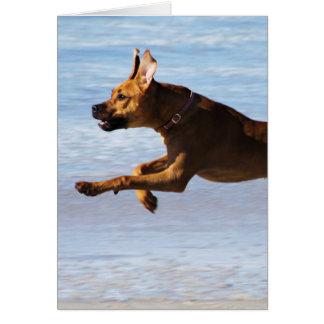 Rhodesian Ridgeback -跳躍 カード