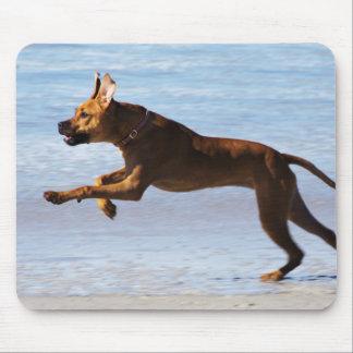 Rhodesian Ridgeback -跳躍 マウスパッド