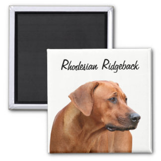 Rhodesian Ridgeback Magneet マグネット