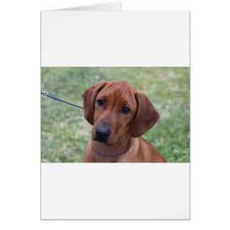 Ridgebackの子犬 カード