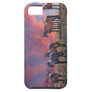 ridgelineの野生の馬の群れ。 劇的なs iPhone SE/5/5s ケース
