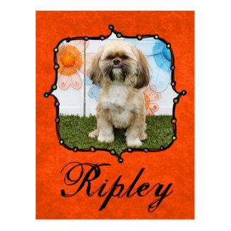 Ripley -シーズー(犬) Tzu ポストカード