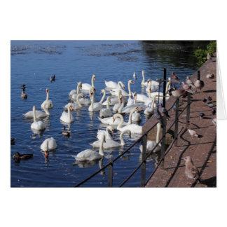 Roath park湖カーディフの白鳥そして他の鳥 カード