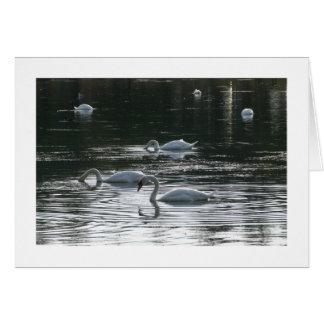 、Roath park湖食べ物を与えている、白鳥縁どられるカーディフ- カード