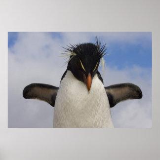 RockhopperのペンギンのEudyptesのchrysocome ポスター