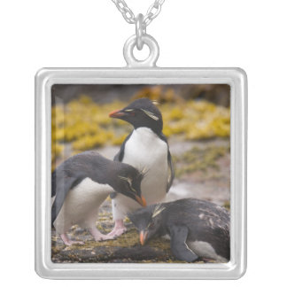 Rockhopperのペンギンは互いに伝達し合います シルバープレートネックレス