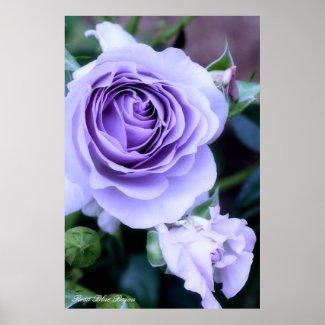 Rosa Blue Bajou ポスター