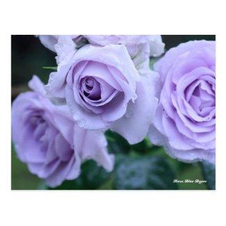 Rosa Blue Bajou ポストカード