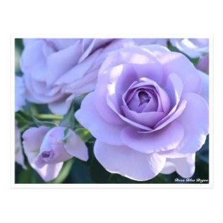 Rosa Blue Bajou Postcard