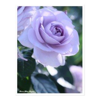 Rosa Blue Bajou:Postcard
