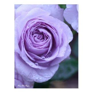 Rosa Blue Bajou:Postcard ポストカード