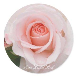 Rosa Bridal Pink Classic Round Sticker