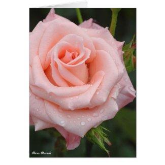 Rosa Cherish:Greeting card