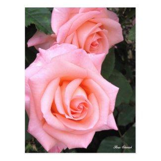 Rosa Cherish:Postcard ポストカード