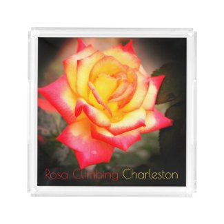 Rosa Climbing Charleston:Acrylic Tray アクリルトレー