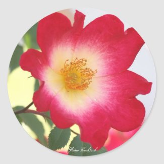 Rosa Cocktail Classic Round Sticker