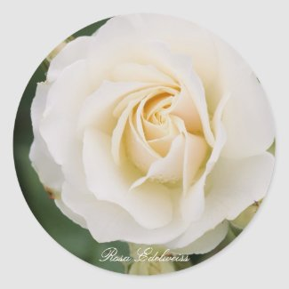 Rosa Edelweiss Classic Round Sticker