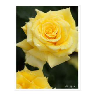 Rosa Emblem:Postcard ポストカード