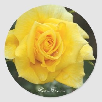 Rosa Friesia Classic Round Sticker