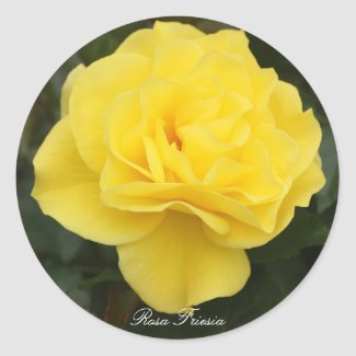 Rosa Friesia Classic Round Sticker