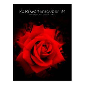 Rosa Gartenzauber '84:Postcard ポストカード