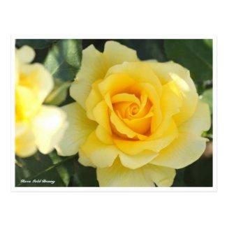 Rosa Gold Bunny Postcard
