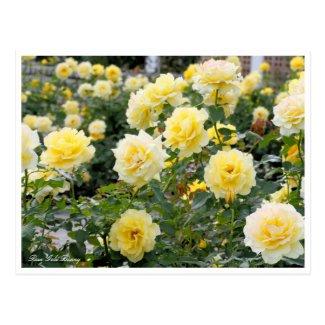 Rosa Gold Bunny:Postcard ポストカード