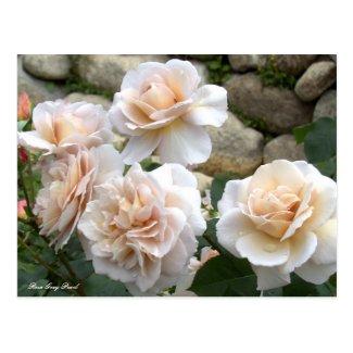 Rosa Grey Pearl ポストカード