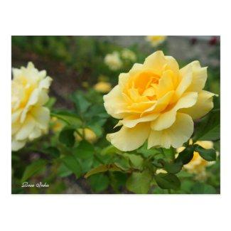 Rosa Inka [Postcard] ポストカード