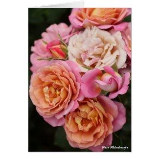 Rosa Kaleidoscope:Greeting card